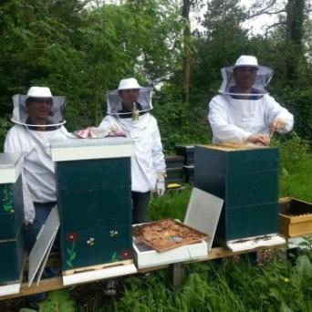 De honingkamer oogsten