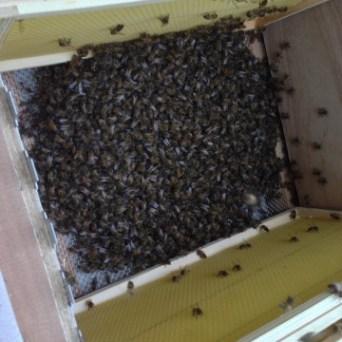 Heel wat meer bijtjes, dan bij Annie