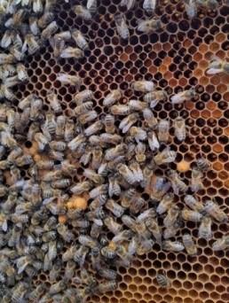 Check! Blije bijen aanwezig.