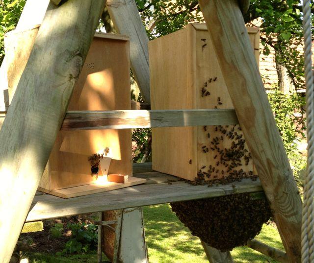 Bienenvolk anlocken