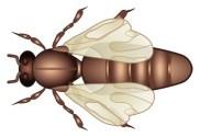 Bienenkönigin Bild