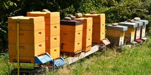 Bienenbeuten aufgestellt