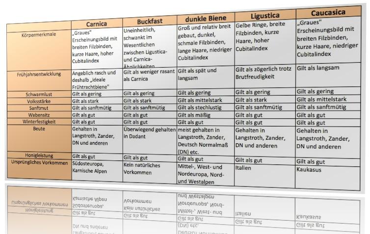 Bienenrassen Tabelle, mit Carnica, dunkle Biene, buckfast, caucasica, lingustica
