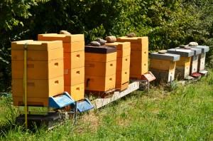 Bienenpatenschaft für ein Bienenvolk übernehmen