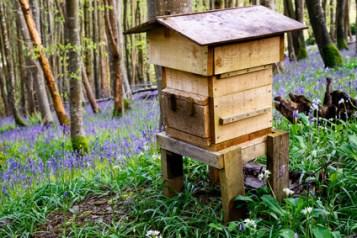 Warre-beute, Warrebeute,Warré Beute, Warré-Bienenbeute, Warré Beute mit fenster, Warré Beute ohne Fenster