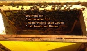 Bienen Ableger bilden, Ableger Bienen, Brutableger, Einwabenableger