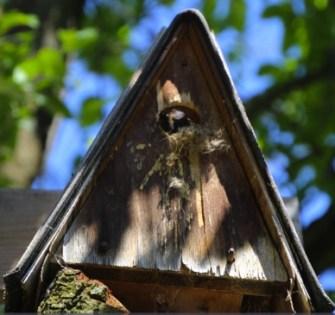 Baumhummel, Baumhummel Nest, Nistkasten