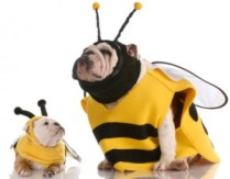 Hunde im Bienenkostüm