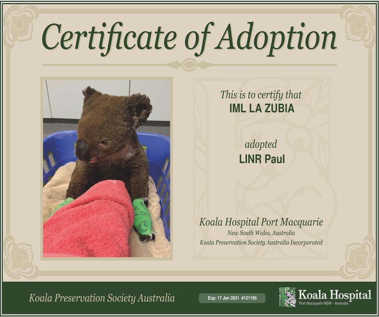 adopción koala Australiano por IML La Zubia