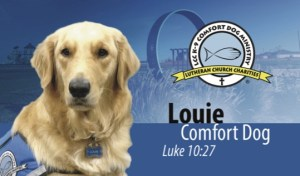Louie Comfort Dog business card