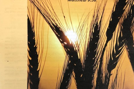 Second Week after Pentecost bulletin cover. Immanuel Lutheran Church LCMS. Joplin, Missouri. Pray earnestly to the Lord of the harvest to send out laborers. Matthew 9:38.