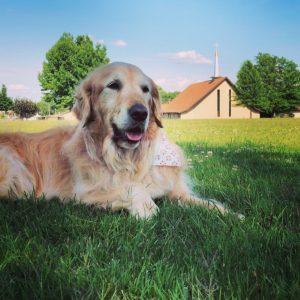 In Memory of Louie Comfort Dog 1