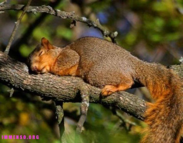 Animali che dormono in posizioni assurde 40 foto