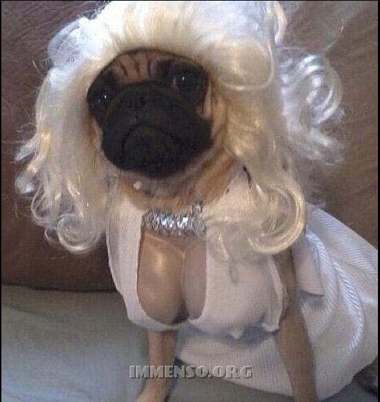 Stranissimi vestiti di Halloween per cani da vedere assolutamente