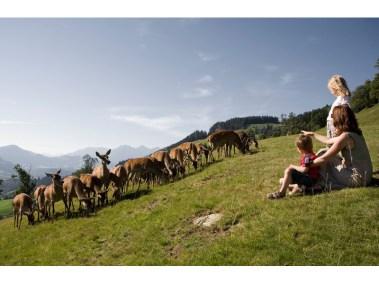 aurach-wildpark