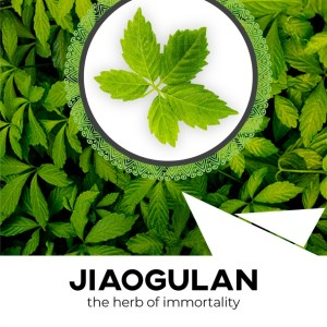 Jiaogulan Tea – The Immortality Herb