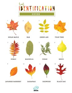 Leaf identification game imom rh com weed by tree also michigan guide user manual  fashionfilter
