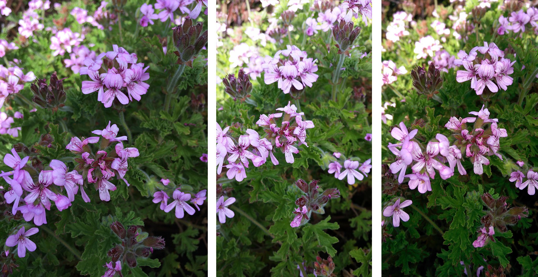 iPhone 5s vs. Galaxy S5 vs. HTC One M8: Macro and closeup photography