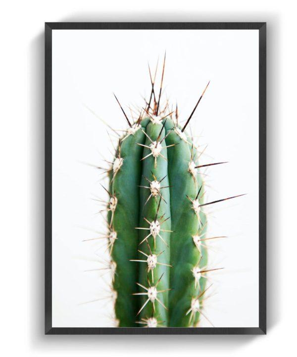 Cactus Eboli