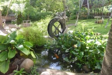 Nas férias ou não, viva intensamente a natureza no Viveiro Tracoá em São Luís MA 11