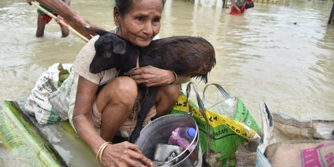 Woman holds a goat while sitting on a raft at the flood affected in Jakhalabandha area on August 13, 2017. Photo by Biju Boro
