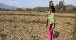 Hmouki, a farmer in Manipur, is worried about feeding her family during the dry season [image by: by Ninglun Hanghal]