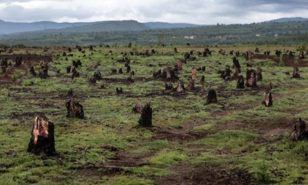 Stumps on the valley caused by deforestation and slash and burn type of agriculture, Madagascar