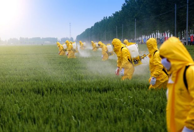 Farmers wearing protective clothing spraying pesticides in a wheat field [image by: Jinning Li / Shutterstock.com]