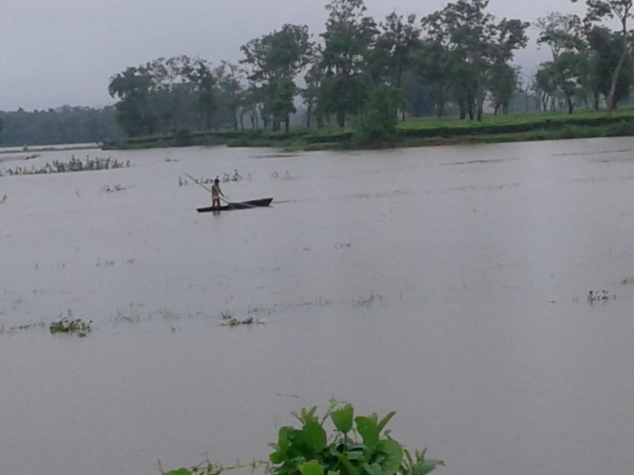The Kaziranga national park is almost completely flooded [image by: Mubina Akhtar]