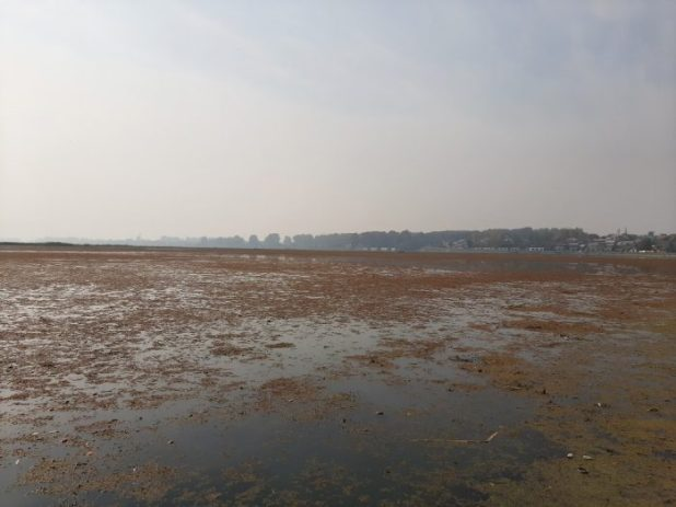 A small patch of the lake was cleaned for the visit of the European MEP delegation [image by: Faisal Bhat]