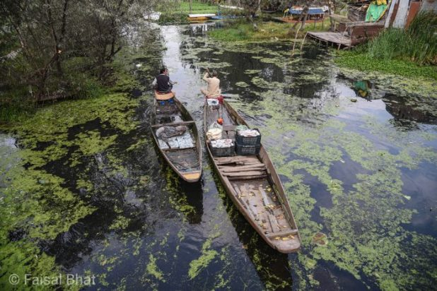 Srinagar's iconic Dal Lake has been suffering from neglect for decades, despite many interventions [image by: Faisal Bhat]