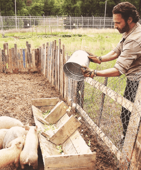 Rick and pigs