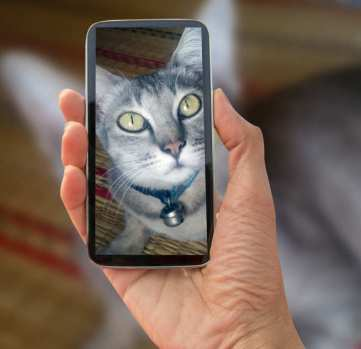 Photo of someone taking a photo of a cat on a smartphone