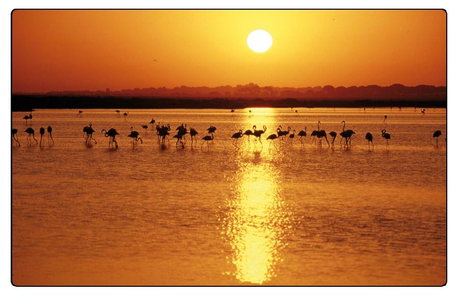 Parque Nacional y Natural de Doñana, Huelva -  Flamencos / © Ente Spagnolo del Turismo - Turespaña