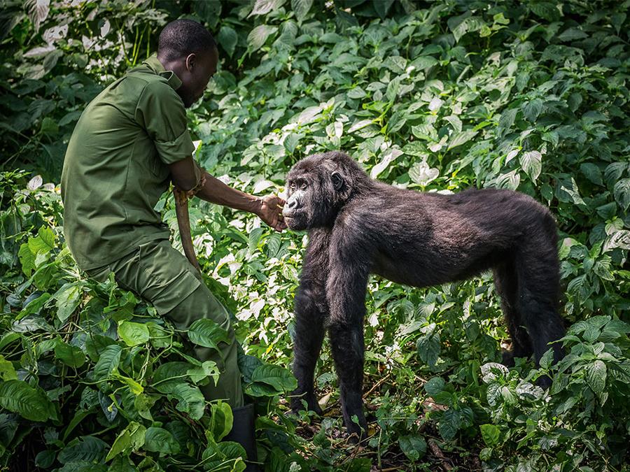 Virunga  / © Scott Ramsay