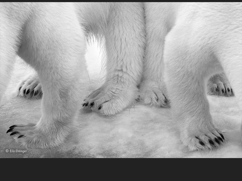 Polar pas de deux