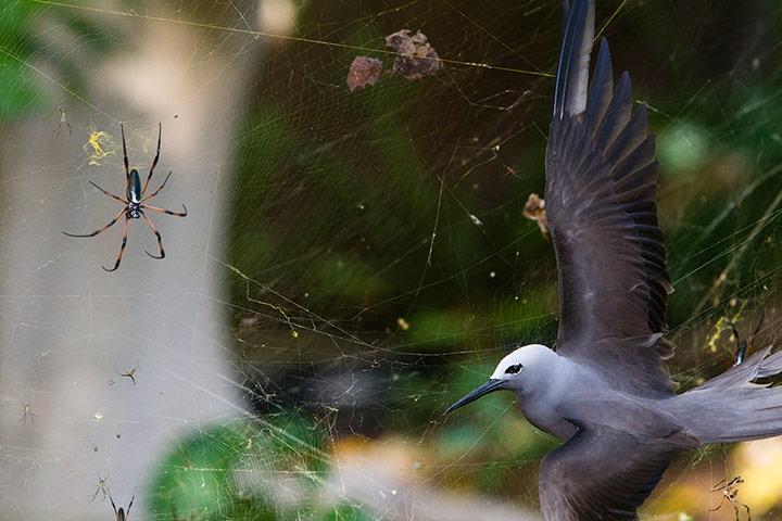 Behaviour, birds winner: Sticky Situation by Isak Pretorius (South Africa)