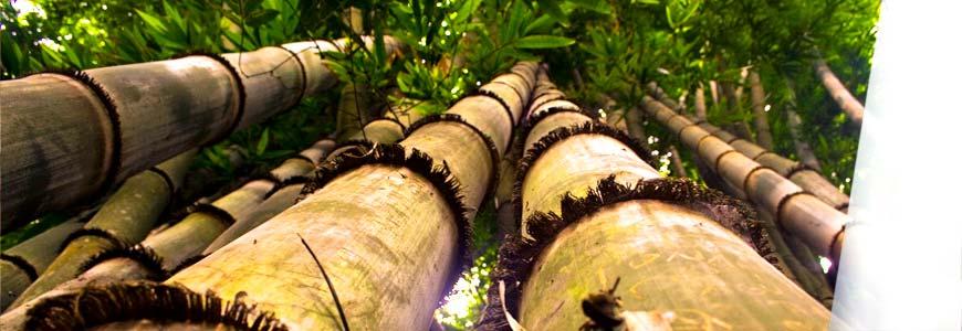 Qué es y cómo funciona la biomasa