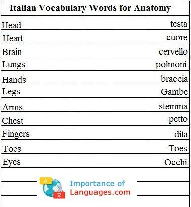Italian Words for Anatomy
