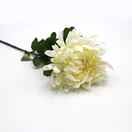 Standard Chrysanthemum Stem  White