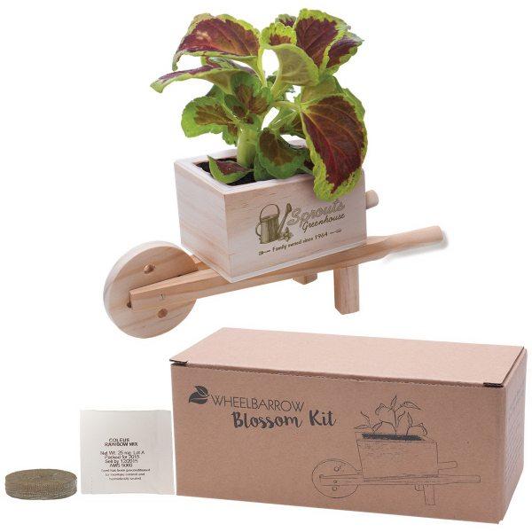 Wooden Wheelbarrow Flower Pot  Seed  Planting Kit