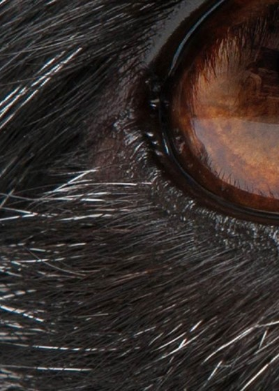 small_animal_ophthalmology_1600x750