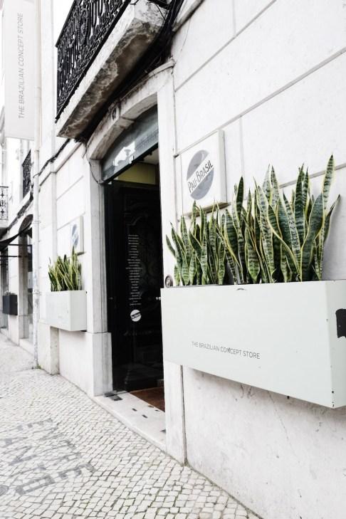 Pau Brasil : Rue da Escola Politécnica