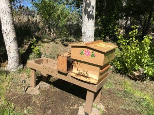 Warre hive and package