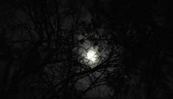 Scorpio Moon ~ 16-18 May 2019 - Stepping Aside