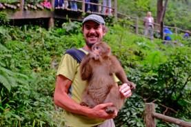 Monkey in Monkey Arms