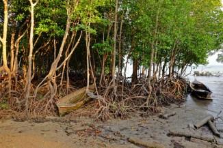 Mangrove & Boats