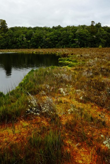 Marshland Colors