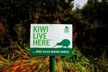 Kiwi Live Here