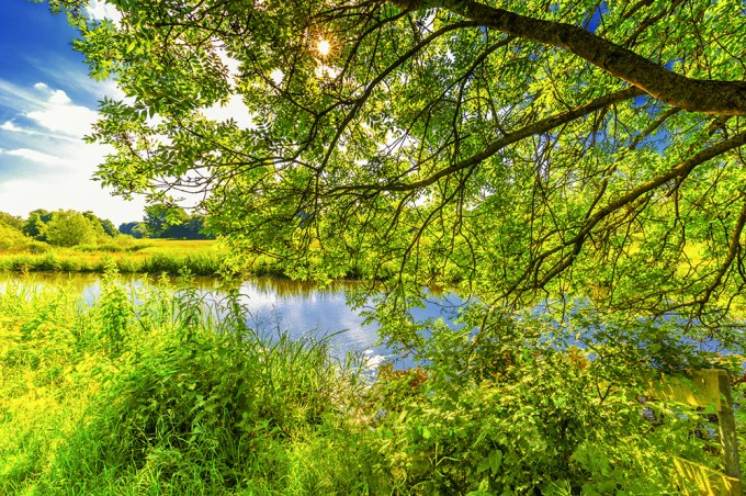 Scenery along water with sunrise view through transparent tree branch with green leaves and diffuse from light and Sun with sun rays